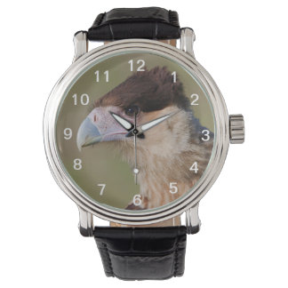 Caracara con cresta relojes de pulsera