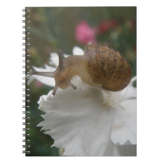 Caracol de Graden y cuaderno blanco del clavel
