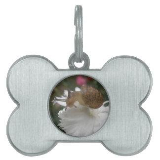 Caracol de jardín y etiqueta blanca del mascota de placas mascota