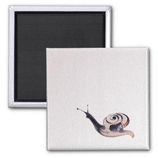 Caracol de la pintura del zen imán cuadrado
