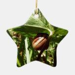 caracol disimulado adorno de cerámica en forma de estrella