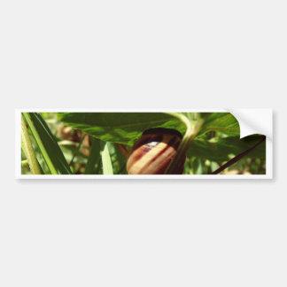 caracol disimulado etiqueta de parachoque