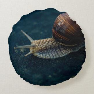 Caracol en el primer azul, fotografía del animal cojín redondo