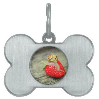 Caracol en la fresa placas de mascota