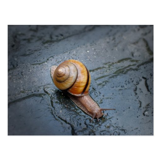 Caracol enérgico en un día lluvioso postales