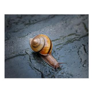 Caracol enérgico en un día lluvioso postal