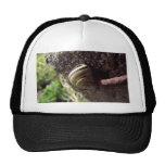 caracol gorras de camionero