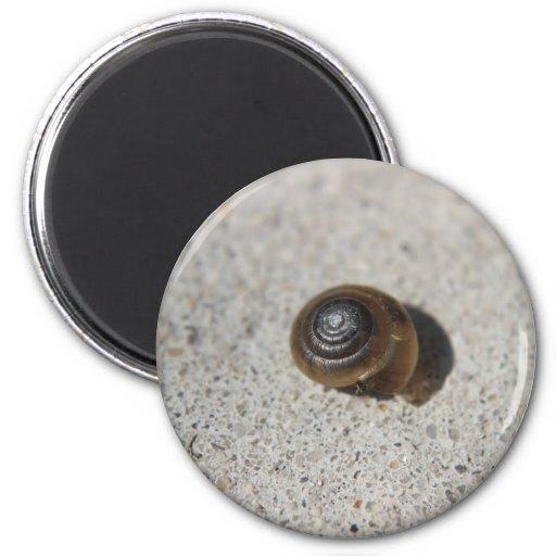 Caracol perezoso imán redondo 5 cm