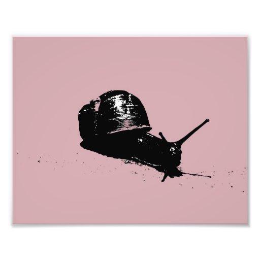 Caracol rosado impresiones fotograficas