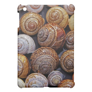 Caracol Shell