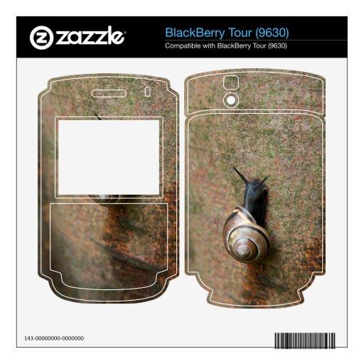 Caracol Skin Para El BlackBerry