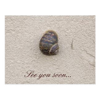 Caracol solo en la postal de la pared
