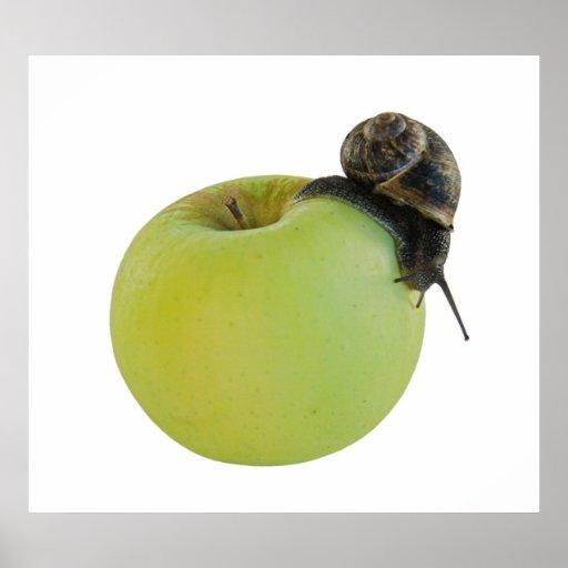 Caracol y manzana poster