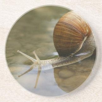 Caracol y reflexión en agua posavasos personalizados