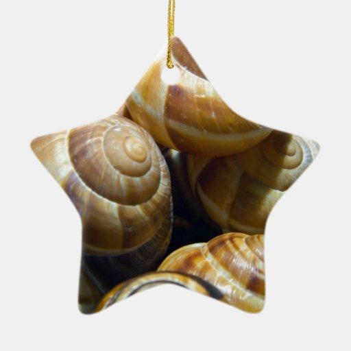 caracoles adorno de cerámica en forma de estrella