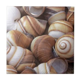 Caracoles Tejas Ceramicas