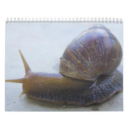 Caracoles Calendario