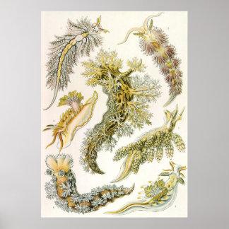 Caracoles del vintage y barras de mar, animales de póster
