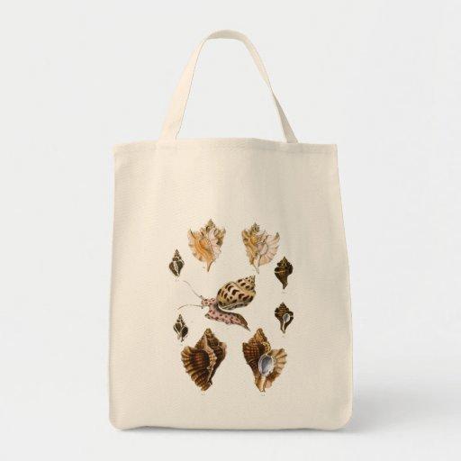 Caracoles y moluscos, organismos del vintage de la bolsa tela para la compra