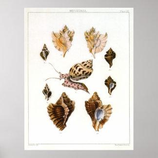 Caracoles y moluscos, organismos del vintage de la póster