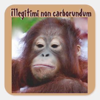 Caras animales De Illegitimi carborundo no Calcomanías Cuadradas Personalizadas