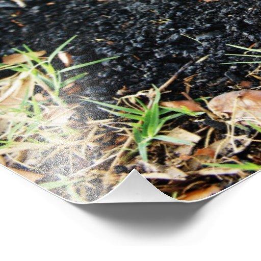Carbón de leña impresiones fotograficas