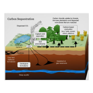 Carbon Dioxide Sequestration from Coal Power Plant Print