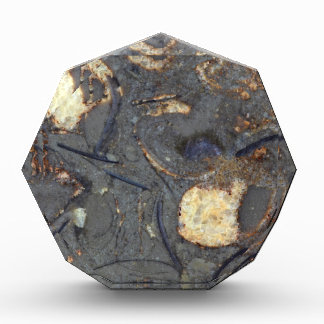 Carbonate rock with fossils acrylic award