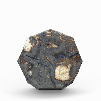 Carbonate rock with fossils award