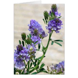Card - Alfalfa Blooms
