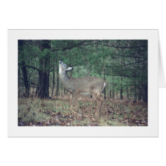 """card, Baby Deer Snacking From Tree in Woods"""", phot Greeting Card"""