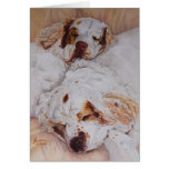 card - Comfort - Two Clumber Spaniels