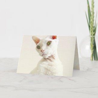 Card | Devon Rex Cat Birthday Card