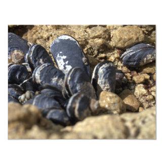 Card - Encouragement - Coastal Shells