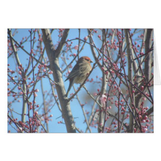 Card - Greeting – Sparrow in Branches