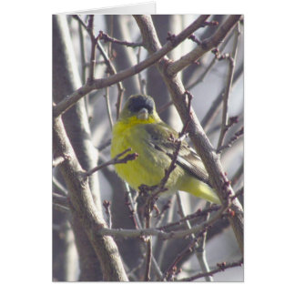 Card - Greeting - Yellow Bird in Branches
