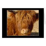 Card - Highland Cattle