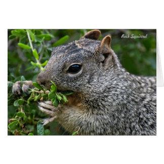 Card: Munchy Squirrel Card