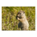 Card of cute ground squirrel eating
