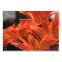 Card - Orange Flowers - Multipurpose