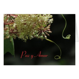Card: Paz y Amor - White and Light Green Flower