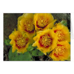 Card / Pricly Pear Cactus Blooms