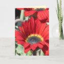Card - Red Daisy - Multipurpose
