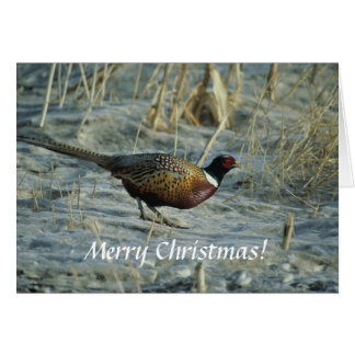 Card / Ring-necked Pheasant / Merry Christmas!