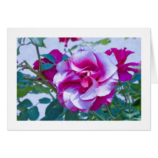 Card, Rose # 232 Card