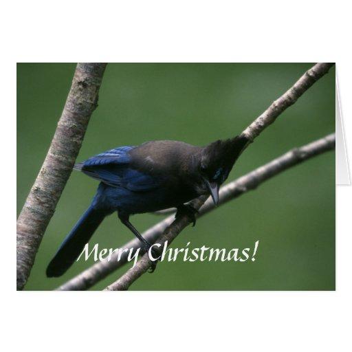 Card / Steller's Jay / Christmas