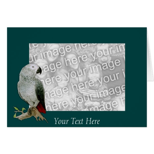 Card Template - African Grey Parrot