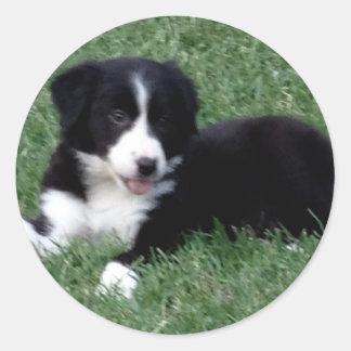 card vertical border collie puppy classic round sticker