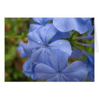 Card with lovely Periwinkle color Flower card
