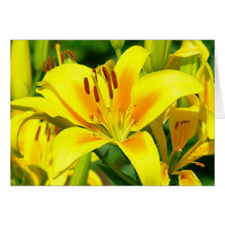 card, YELLOW AND SIENNA DAY LILY Card